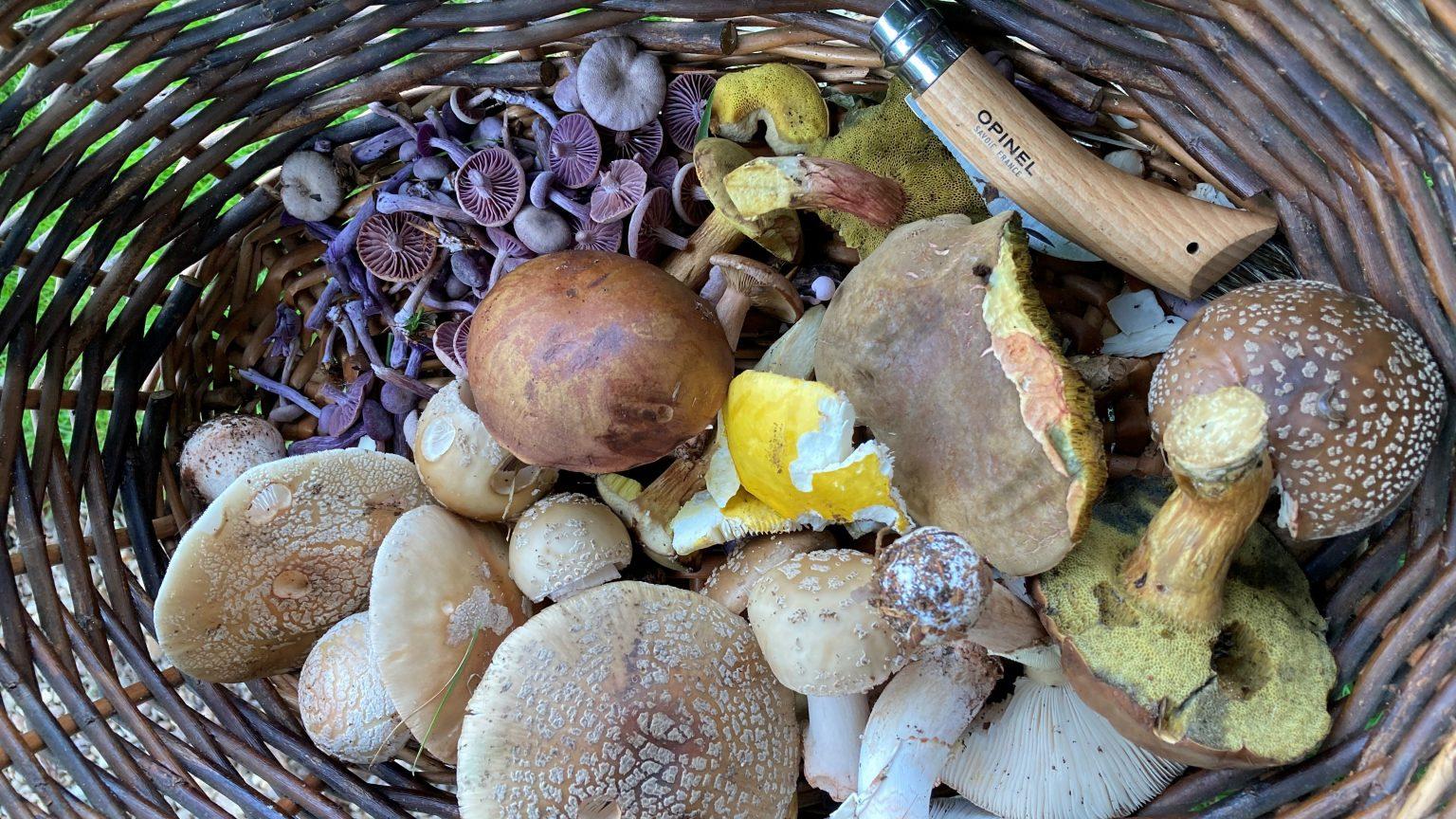 Mushrooms pic 2